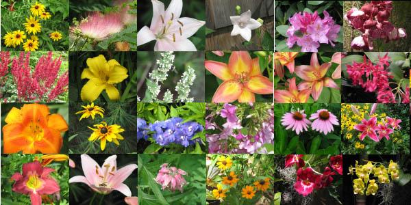 Significato simbolico dei fiori