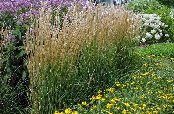 graminacee ornamentali guida completa alla coltivazione e
