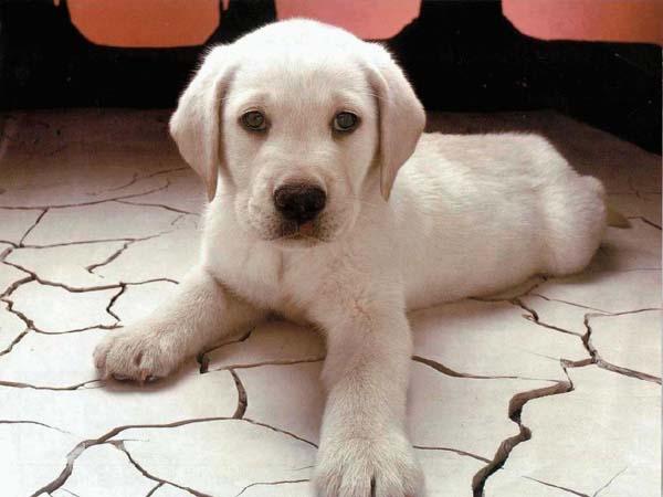 Cane: adottare un cucciolo