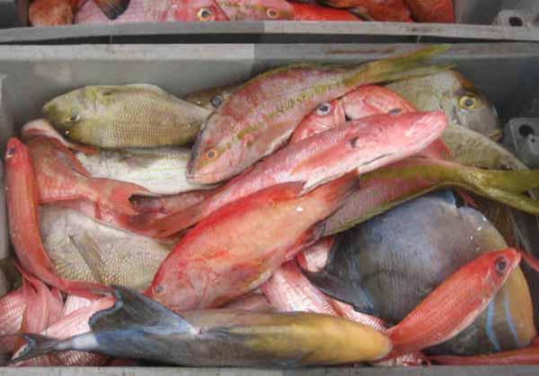 Pesce fresco: stagionalità