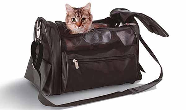 Viaggiare con gli animali da compagnia