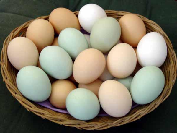 Uova: scelta e conservazione