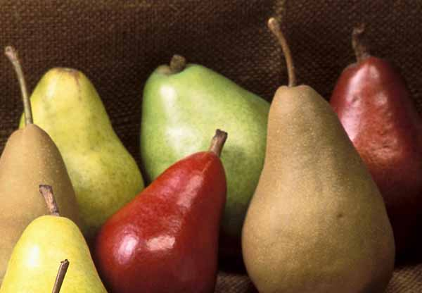 Le varieta di pera