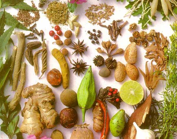 Coltivazione di piante aromatiche