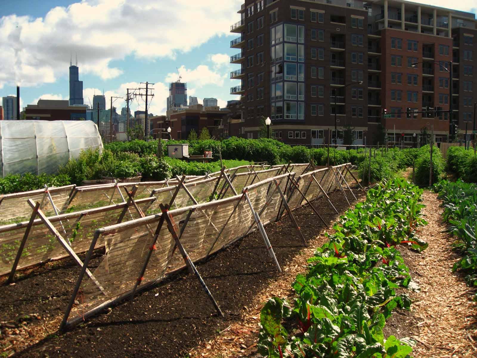 Aprire una fattoria didattica o una city farm