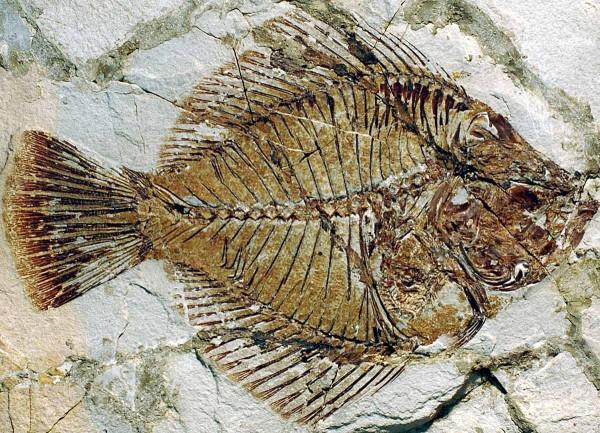 Come collezionare fossili