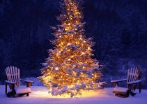 Come scegliere l'albero di Natale giusto per rispettare l'ambiente