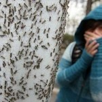 Fobia per insetti