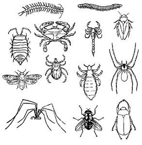 punture di insetti nei bambini