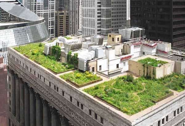 Costruire un giardino sul tetto