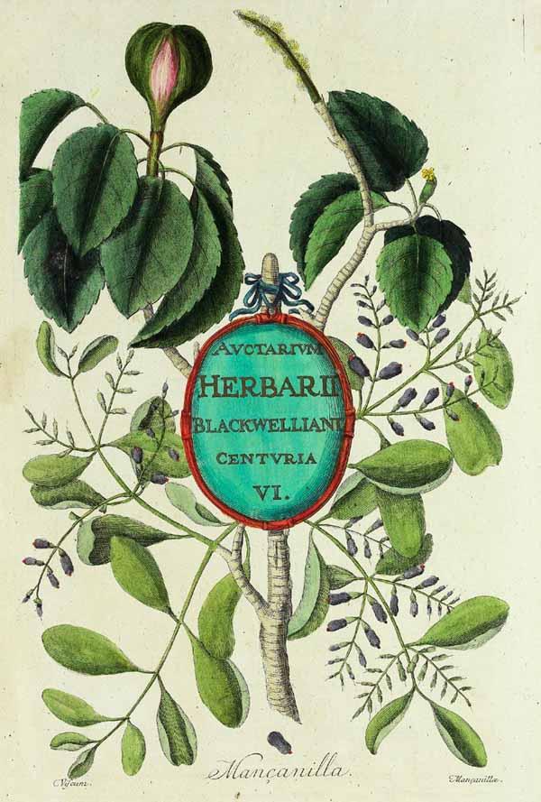 prodotti dell'erborista: tisane, polveri, estratti, oli essenziali