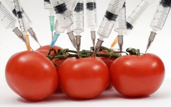Cosa sono gli OGM