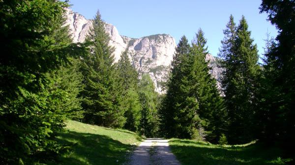 Conifere guida completa for Conifere da giardino