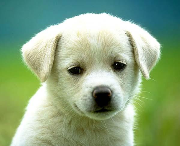 Cane: primo approccio con il cucciolo