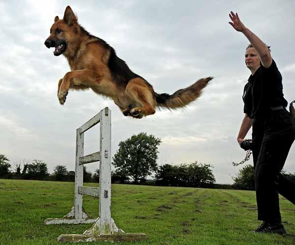 Addestramento cani: corsi, centri e scuole