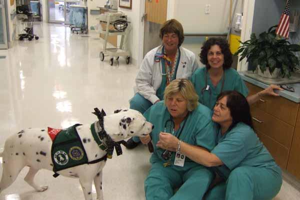 Aprire una pensione per animali, un addestramento cani, una struttura pet-therapy