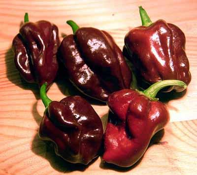 Habanero cultivar delle varietà di Capsicum chinense
