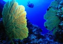 Come usare le alghe
