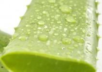 Come usare le foglie di aloa