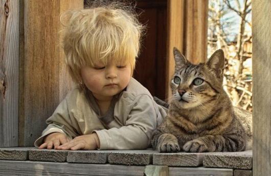 Come comunicano i gatti