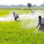 Glifosfato: il ruolo oscuro delle multinazionali