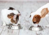 Come alimentare cani e gatti