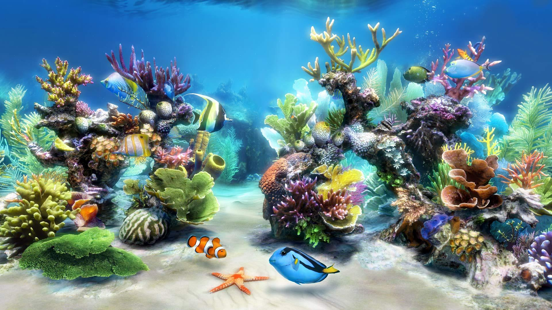Le migliori e più semplici piante per gli acquari di acqua dolce