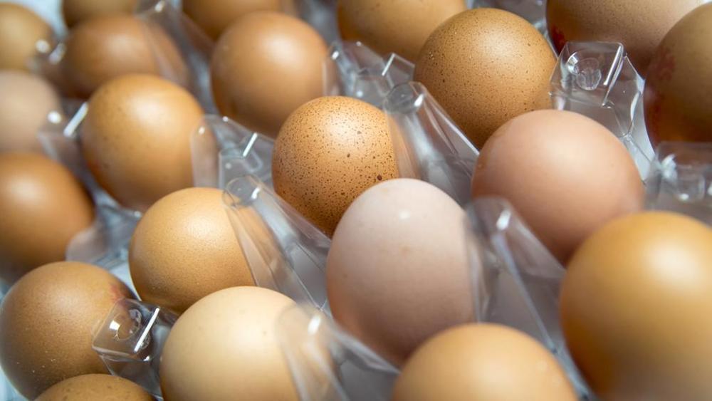 Lo scandalo delle uova contaminate: cosa c'è da sapere
