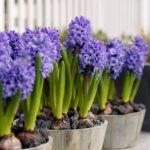 Bulbi da fiore: consigli utili per una resa perfetta