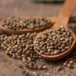 proprietà e usi dei semi di canapa