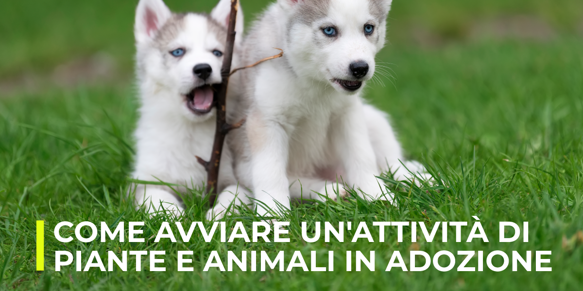 Come avviare un'attività di piante e animali in adozione