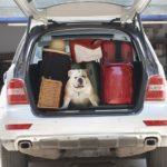 Animali e viaggi in macchina
