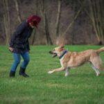 Gare canine per aumentare il feeling