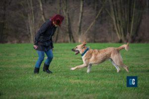 Gare canine per aumentare il feeling tra cane e padrone