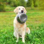 Suggerimenti utili per scegliere la migliore ciotola per cani