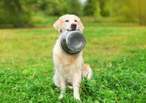 Ciotola per cani